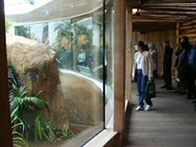 Glass Enclosures For Animals